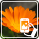 Photos of Flowers by Addictive Free Apps