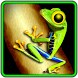 Toxic Frog by Ramble Interactive