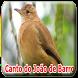 O canto do João-de-barro (Furnarius rufus) by legend of bird