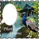 Peacock Bird Photo Editor Latest by Handsome Partner