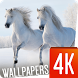 Horses Wallpapers 4K by Ultra Wallpapers