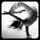 Street Dance Moves