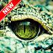 Crocodile Wallpaper by Pinza