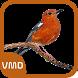 Kicau Anis Merah Master by VisiMedia Dev
