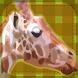 Africa Animal Pelmanism by Yasukazu Umekita