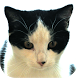 Cat Diaries Lite by TSP mobile solutions
