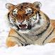Tiger Snowfall Live Wallpaper by Arshad Shaikh