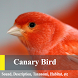 Canary Birds Master by Phipaya Developer