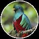 iMonteverde - Costa Rica by iMonteverde