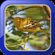 Masteran Burung Cipoh by Afnan Dev