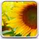 Sunflower Live Wallpaper by Creative Factory Wallpapers