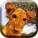 Little Lion Cub Live Wallpaper by XYZ Free Labs