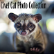 Civet Cat Photo Collection
