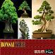 Bonsai Tree App by 4months App