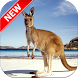 Kangaroo Wallpapers by Fresh Wallpapers