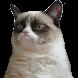 Cat Memes by XR Studios