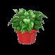 Домашние Цветы by Kiwizilla Lab