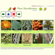 Plant Identification - worldwide by Coogni GmbH