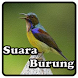 Kicau Kolibri