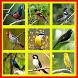 todo o chilrear dos pássaros do brasil by Lurah APP