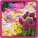 Garden Flowers Live Wallpaper by HQ Awesome Live Wallpaper