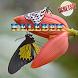 Kelebek Fikirleri by byearlina