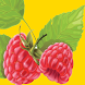 Fruits Games for Free by games-downloadshop.eu