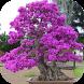 Bonsai Plants Ideas by Saiyaapp