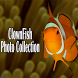 Clown Fish Collection