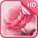 Pink Roses Live Wallpaper by Dream World HD Live Wallpapers