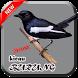 Kicau Burung New 2017 by Rizky Rosani App