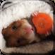 Hamster Live Wallpaper by Sfondi Animati 3D