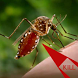 Anti Dengue by Bestapp Developers