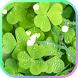 Green Spring Live wallpaper by Spike Tech Ltd