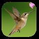 Kicau Kolibri Master Gacor by hendartoji