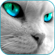 Handsome Cat HD Live Wallpaper by Thanush Larsen