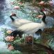 White Birds Live Wallpaper by Daksh Apps