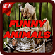 Funny Animals Fans