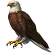 Eagle Widget/Stickers by Miracle (HD Widgets)