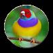 Novo Cantos de Pássaros Silvestres by Lurah APP