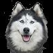 Все Породы Собак by NewWayMobile