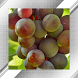 Vineyard Photo Frames by SYZYGY SOUNDS AND FRAMES