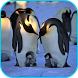 Penguins Video Live Wallpaper by Axis Video Studio UK