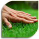 Lawn - Garden Care by Expert Home Studio