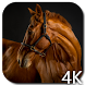 Horses 4K Video Live Wallpaper by Hubert Apps
