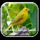Canto canario belga salsa 2 by M Zakia Randi 354 Apps