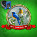 Kicau Burung Master Mp3 by Adeliascu