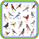 Novo Todos Cantos Pássaros Brasil-HD by ayyasy