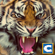 Ultimate Tiger Simulator by Clans