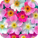 Flowers Wallpapers by Dabster Software
